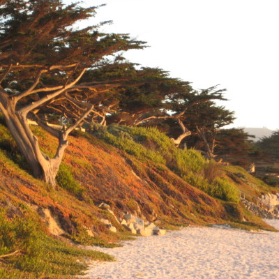 Carmel a Place of Inspiration